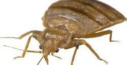 kill bed bugs with ozone